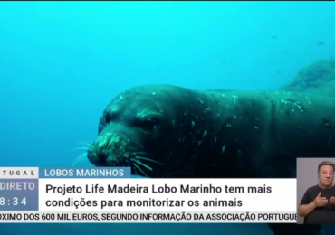 LIFE Madeira monk seal project in Portugal em Direto