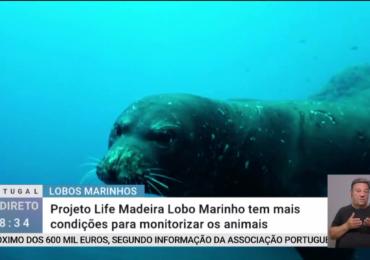 Projeto LIFE Madeira Lobo-marinho no Portugal em Direto